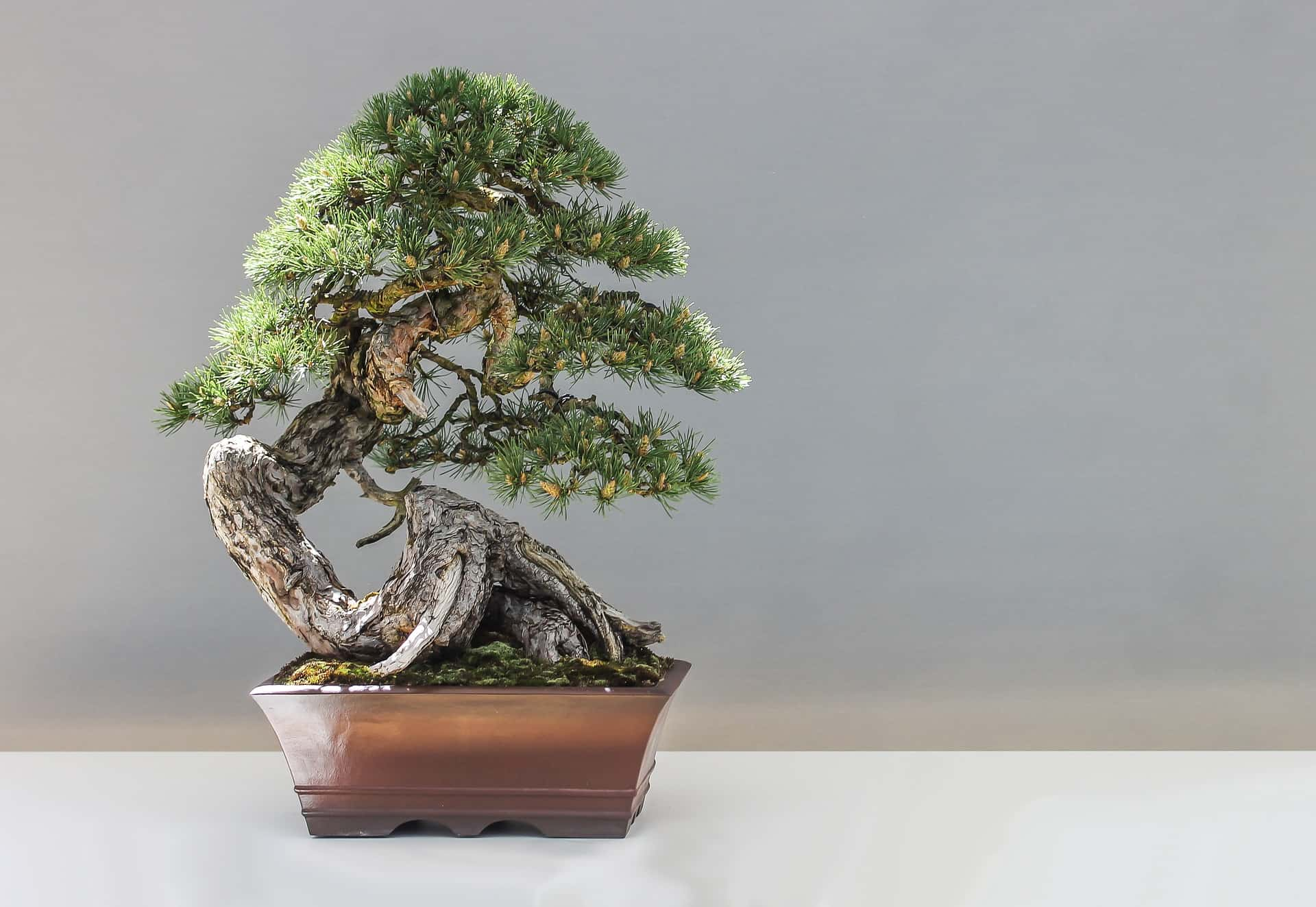 bonsai tree sitting in a pot
