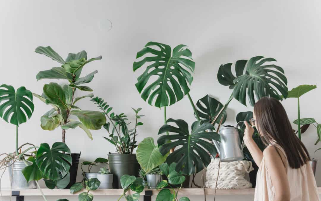 The Plant Lover's Guide To The Best Nurseries In Brisbane