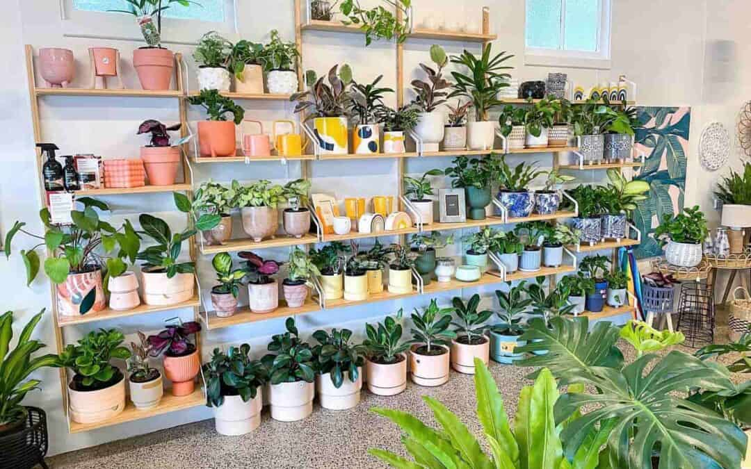 The Best Places To Buy Plants In Cairns
